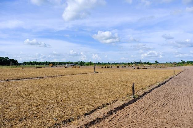 Zaorane pole z niebem