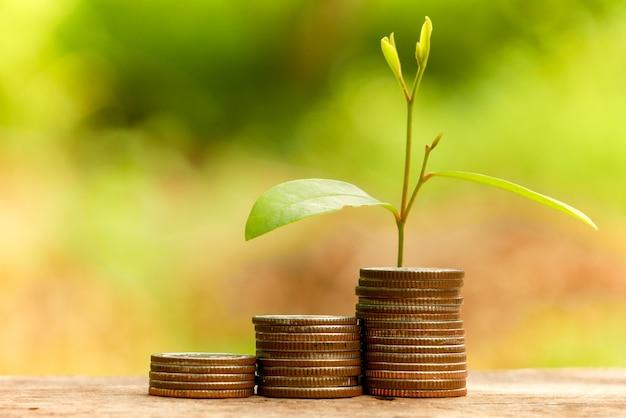 Zaoszczędź na koncepcji inwestycyjnej. roślina wyrastająca z monet