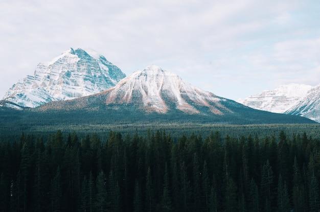 Zapierająca dech w piersiach górska sceneria z drzewami z przodu