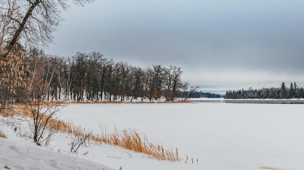 Zapierająca dech w piersiach sceneria krainy z pokrywą śnieżną otoczoną szeregiem zielonych drzew