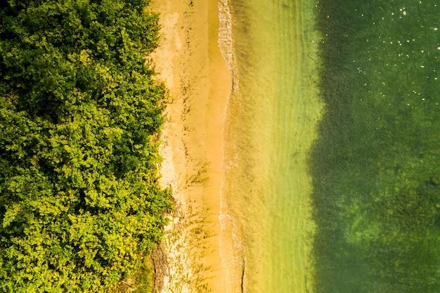 Zapierająca dech w piersiach sceneria tropikalnej plaży z pięknymi palmami i zielenią