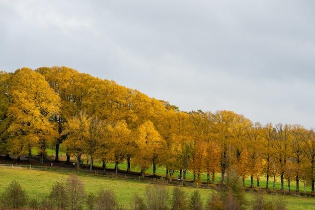 Zapierające dech w piersiach jesienne drzewa na wzgórzu
