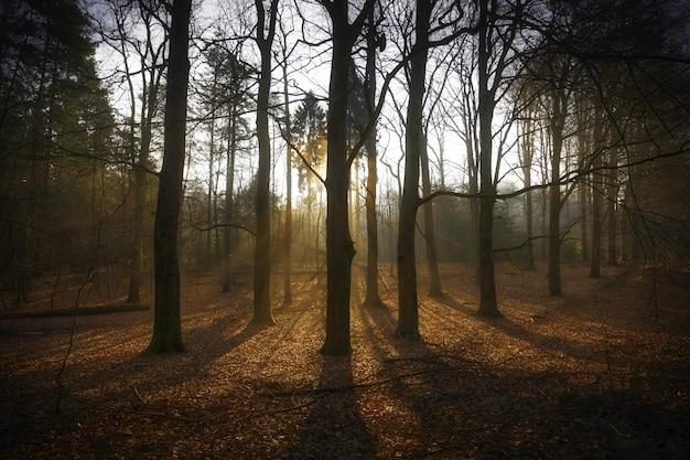 Zapierające dech w piersiach ujęcie wschodu słońca nad parkiem narodowym veluwezoom w holandii jesienią