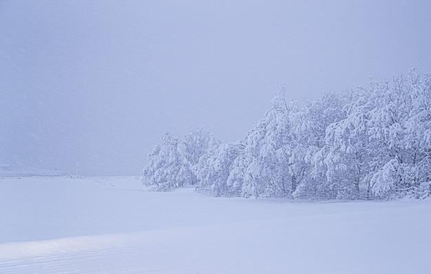 Zapierające dech w piersiach widok na pokryte śniegiem drzewa na polu pokrytym śniegiem