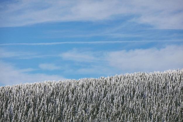 Zapierające dech w piersiach zdjęcia pięknego lasu z drzewami pokrytymi śniegiem
