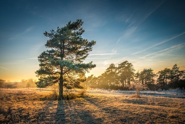 Zapierający dech w piersiach widok na drzewo na polu z linią drzew w tle pod pięknym niebem