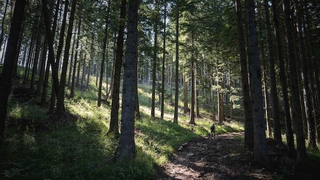 Zapierający dech w piersiach widok na niesamowity las z dużą ilością drzew