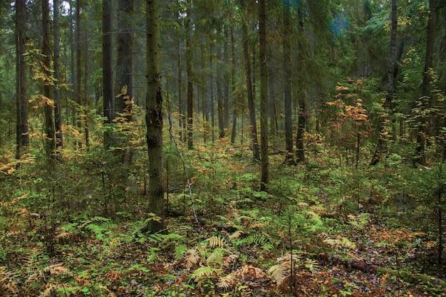 Zapierający dech w piersiach widok na piękne drzewa i rośliny w środku miejscowej dżungli