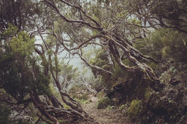 Zapierający dech w piersiach widok na piękne drzewa wokół ścieżki uchwyconej na maderze w portugalii