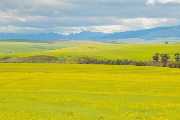 Zapierający dech w piersiach widok na rozległe, porośnięte trawą łąki w pochmurny dzień
