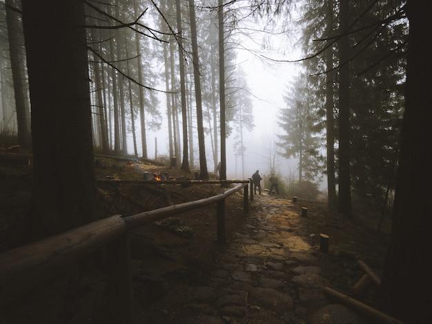 Zapierający dech w piersiach widok na ścieżkę w środku lasu na maderze w portugalii