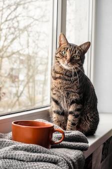 Zaprawa murarska kot siedzi i wygląda przez okno z widokiem na zimę. kot bengalski. miejsce na tekst. ciepło i domowy komfort. problem bezdomnych zwierząt. dzień ochrony zwierząt. medycyna weterynaryjna. kastracja