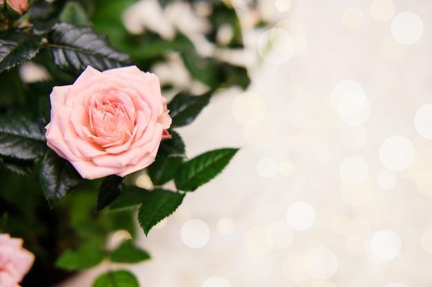 Zaproszenie z różowych róż, bukiet kwiatów, bokeh. kartka z 8 marca