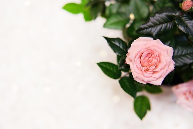Zaproszenie z różowych róż, bukiet kwiatów, bokeh. kartkę z życzeniami na dzień matki