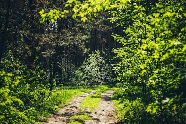 Zarośla w gęstym lesie. malowniczy, słoneczny widok z kontrastami lasu.