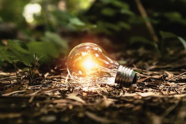 Żarówka na ziemi z światłem słonecznym w lesie. koncepcja czystej energii