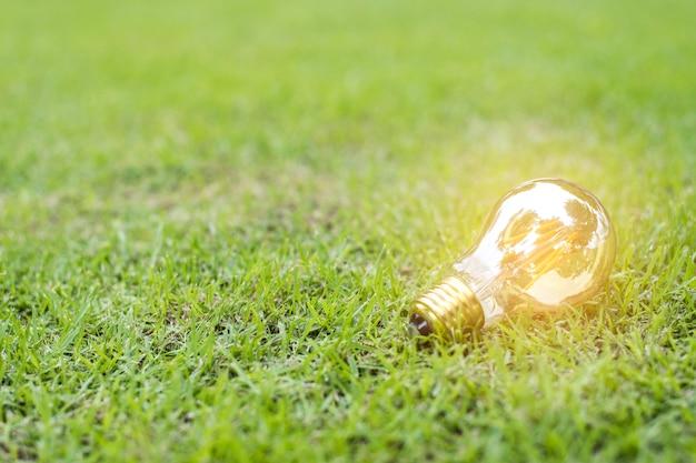 Żarówka w zielonej trawie