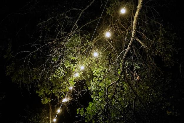 Żarówki nocą, girlanda elektryczna wisząca na drzewie, dekoracja festiwalu