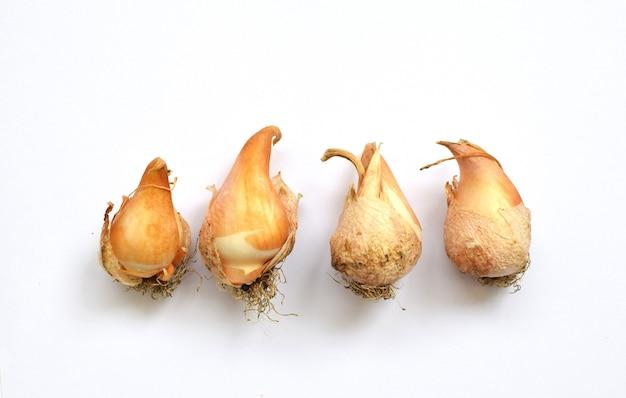 Żarówki tulipanów na białym tle