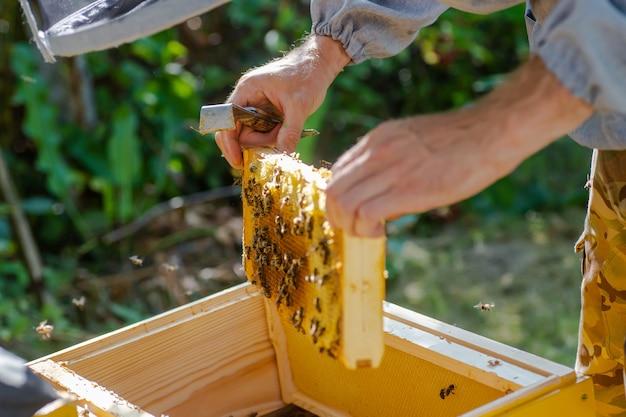 Zarządzanie wiosennymi ulami. pszczelarz sprawdza ula pszczół i przygotowuje pasiekę na sezon letni. pszczelarstwo.