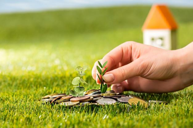 Zasadza dorośnięcie w moneta szklanym słoju dla pieniądze na zielonej trawie