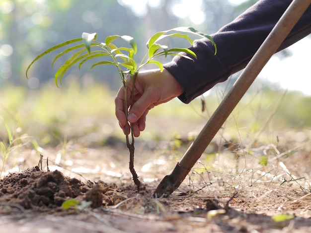 Zasadzić drzewo