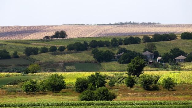 Zasiane pola, bujne drzewa i kilka budynków mieszkalnych w mołdawii