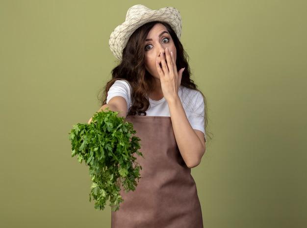 Zaskoczona młoda ogrodniczka w mundurze w kapeluszu ogrodniczym kładzie rękę na ustach i trzyma kolendrę odizolowaną na oliwkowej ścianie