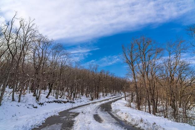 Zaśnieżona górska droga wśród lasu