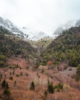 Zaśnieżone góry i kolorowy las w pochmurny dzień