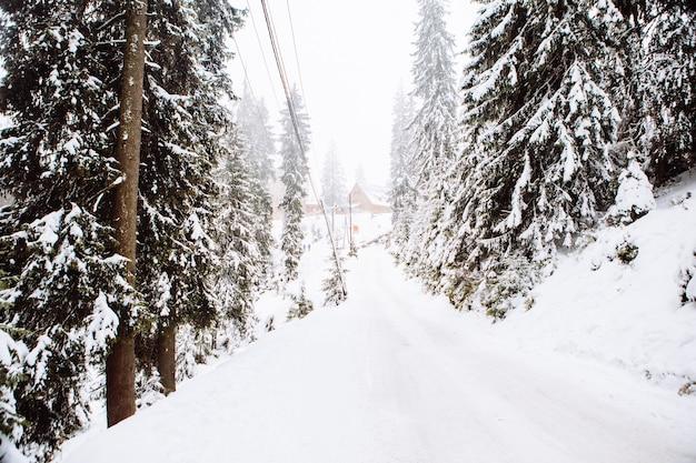 Zaśnieżony zimowy szlak w leśnej przestrzeni kopii