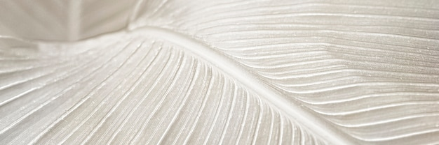 Zasób projektowy tła liścia kremowego ptaka raju