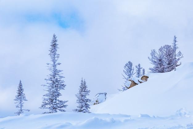 Zaspy i pokryte śniegiem drzewa w puszystym śniegu, niebo w chmurach, zimowy krajobraz, mróz.