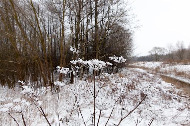 Zaspy śnieżne i rośliny zimą