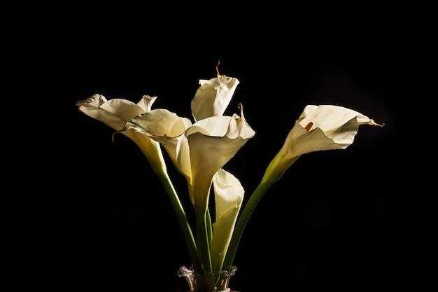 Zatoczki kwitną odosobnionego w czarnym tle (aron leluja)