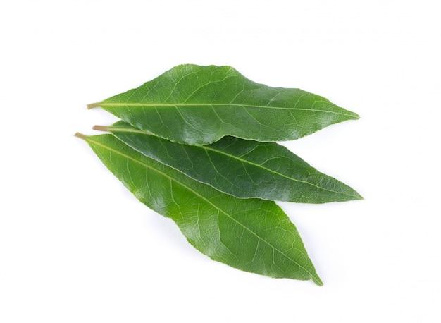 Zatoka liście odizolowywający na bielu odizolowywającym