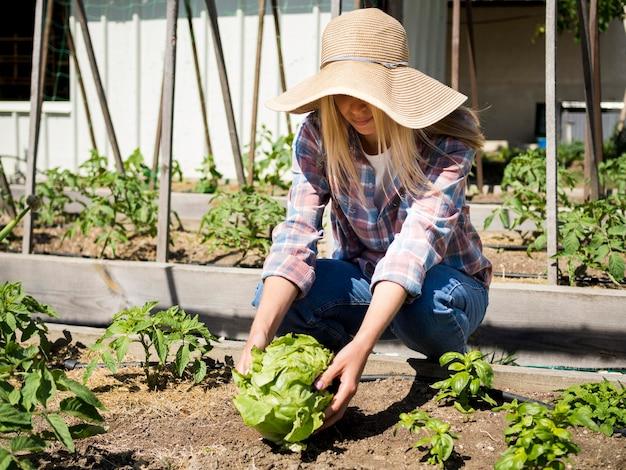 Zawodnik bez szans kobieta bierze zieloną kapustę od ziemi