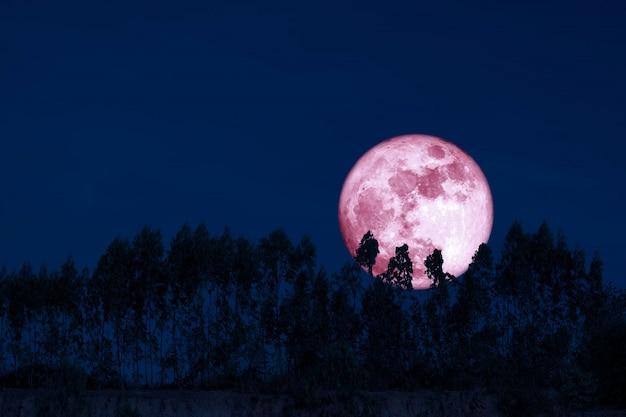 Zbiera różowy księżyc na nocnym niebie z powrotem nad sylwetką sosen