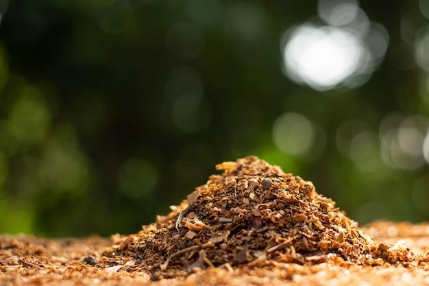 Zbiera się dużo trocin lub wiórów drewnianych i jest poranne słońce.