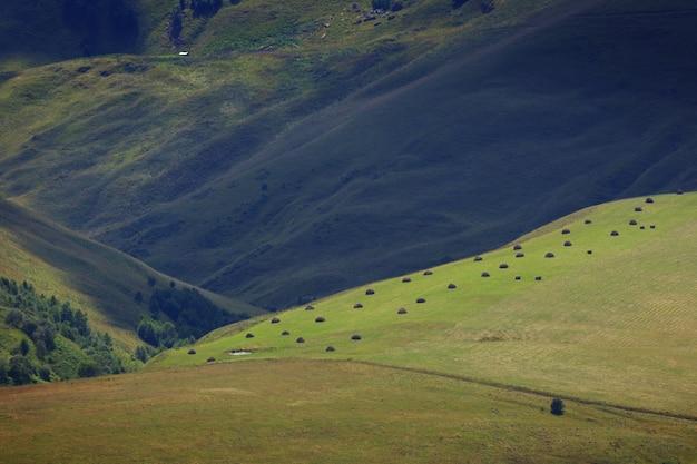 Zbierana na zimę pasza dla zwierząt na farmie na północnym kaukazie w rosji.
