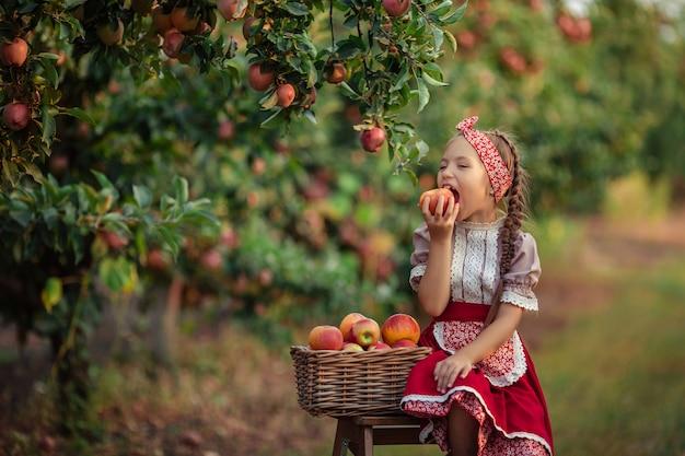 Zbieranie jabłek na wsi w ogrodzie. piękna dziewczyna w strojach vintage czerwona spódnica i solokha siedzi obok wiklinowych koszy z jabłkami i jedzenia owoców