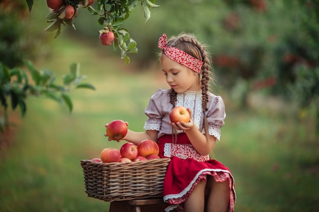 Zbieranie jabłek na wsi w ogrodzie. piękna dziewczyna w strojach vintage czerwona spódnica i solokha siedzi przy wiklinowych koszach z jabłkami i patrzy na owoce