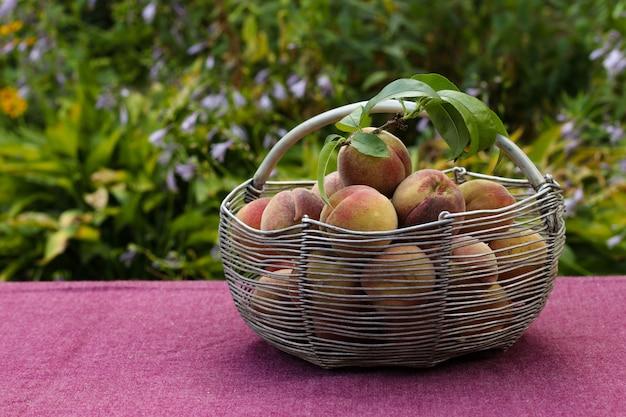 Zbierz dojrzałe brzoskwinie w żelaznym koszu na stole w ogrodzie, zbliżenie