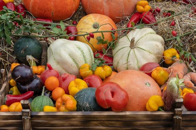 Zbierz jesienne warzywa, z bliska. dynie, pomidory, melony, papryki, bakłażany i inne jesienne warzywa . tło żywności ekologicznej. jesienna koncepcja żywności. zdrowe organiczne zbiory warzyw