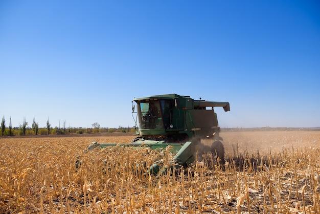 Zbiór kukurydzy na polu jesienią. zbiór pracy na polu kukurydzy.