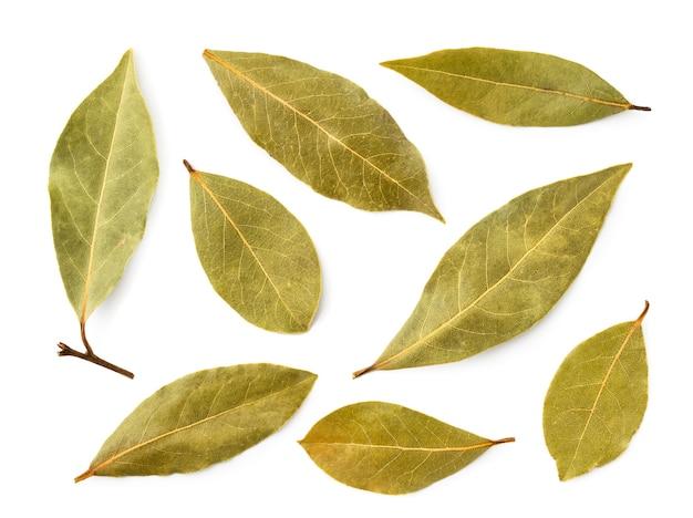Zbiór liści laurowych na białym tle. widok na górę.