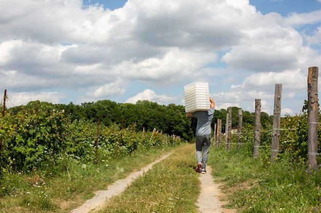 Zbiór na plantacjach. pracownik nosi białe plastikowe pudełka na jagody.