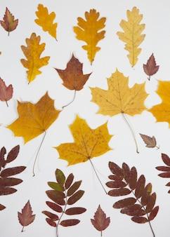 Zbiór pięknych kolorowych liści jesienią na białym tle