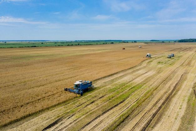 Zbiór pszenicy latem. dwa kombajny pracujące w polu. kombajn zbożowy maszyna rolnicza zbierająca złotą dojrzałą pszenicę na polu. widok z góry.
