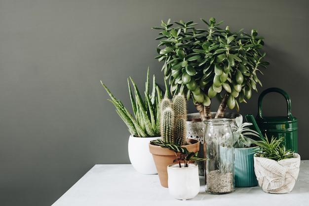 Zbiór różnych kaktusów i sukulentów w różnych doniczkach